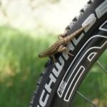 Выбор покрышек для горного велосипеда
