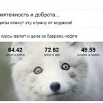 Про сбитую велосипедистку с Южной Кореи в России и работу 5-ой колоны